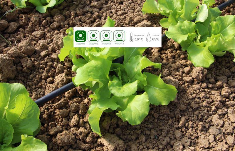 Diba Bio Innovative Farm
